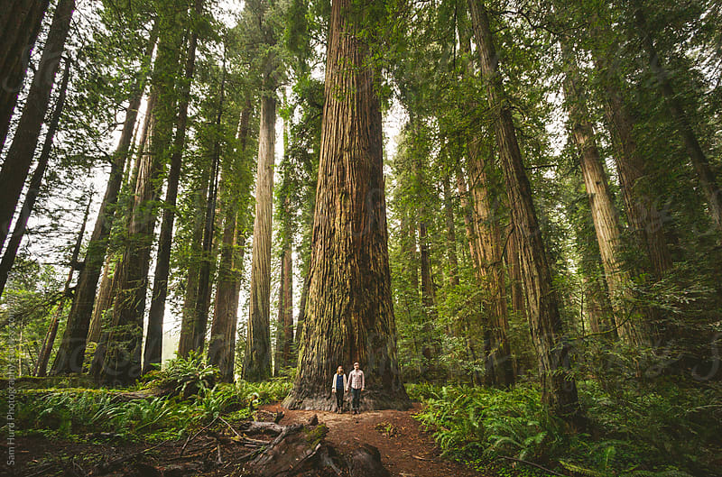 man and woman in front of redwood by Sam Hurd Photography for Stocksy United