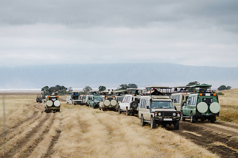 Safari vehicles in Africa's Serengeti National Park by Matthew Spaulding for Stocksy United