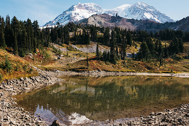 summer landscape of mt rainier national park by Jesse Morrow for Stocksy United