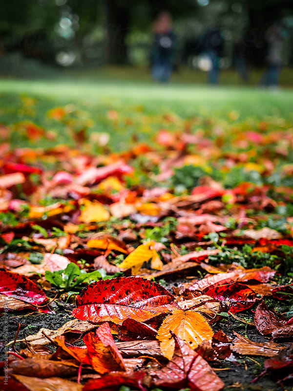 Autumn leaves on the ground by Helen Sotiriadis for Stocksy United