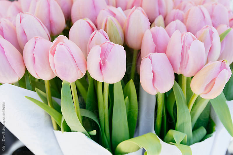 Bouquets of tulips at market by Kristin Duvall for Stocksy United