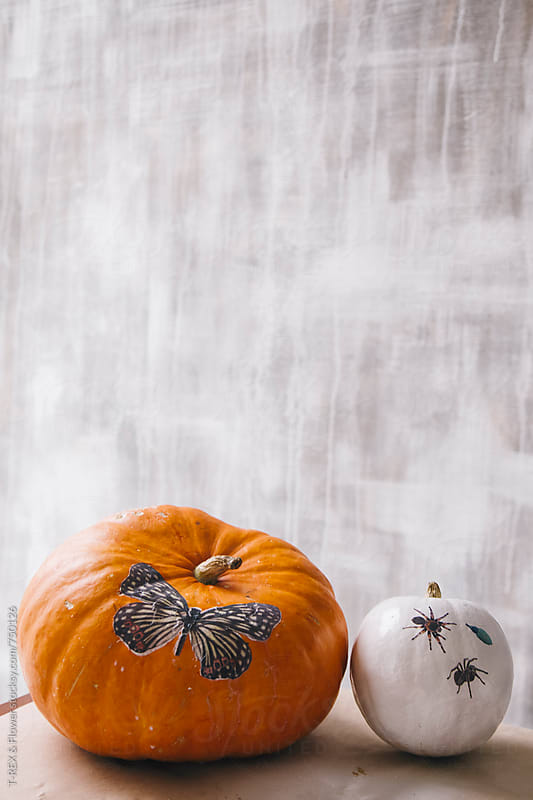 Two pumpkins on grey background by Danil Nevsky for Stocksy United