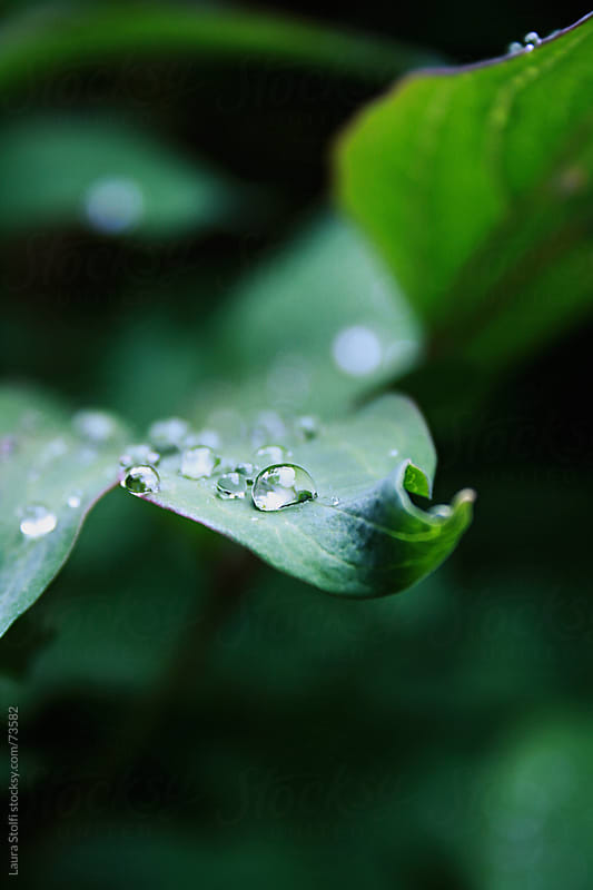 Close-up of dew drops on leaf  by Laura Stolfi for Stocksy United