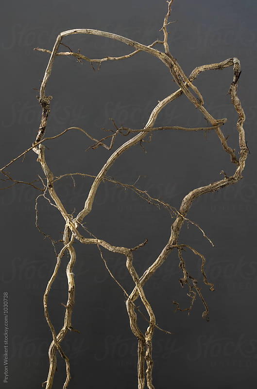 Shaped and abstract tree roots by Peyton Weikert for Stocksy United