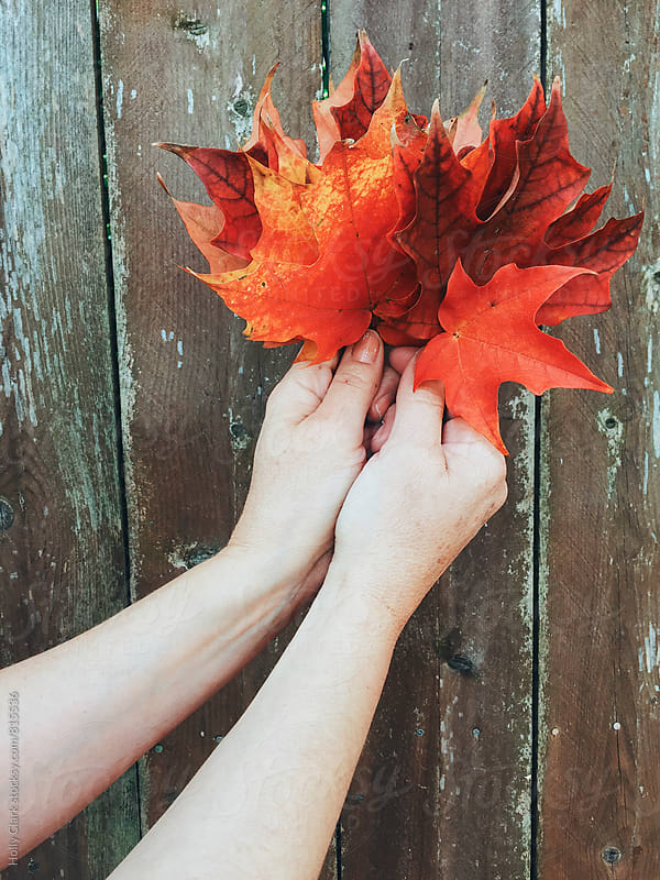 Hands holding colorful leaves against a fence by Holly Clark for Stocksy United