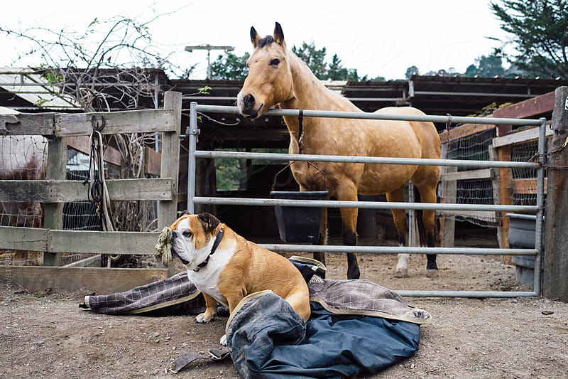 A dog and horse sit waiting. by Lucas Saugen for Stocksy United
