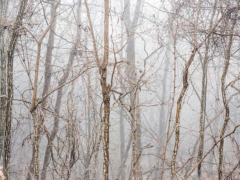 Tree trunks in the fog by Milena Milani for Stocksy United