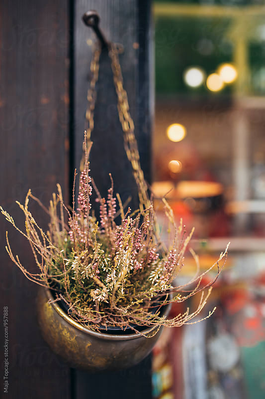 A beautiful plant hanging outside by Maja Topcagic for Stocksy United