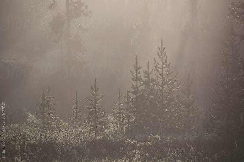 Mist in the forest by michela ravasio for Stocksy United