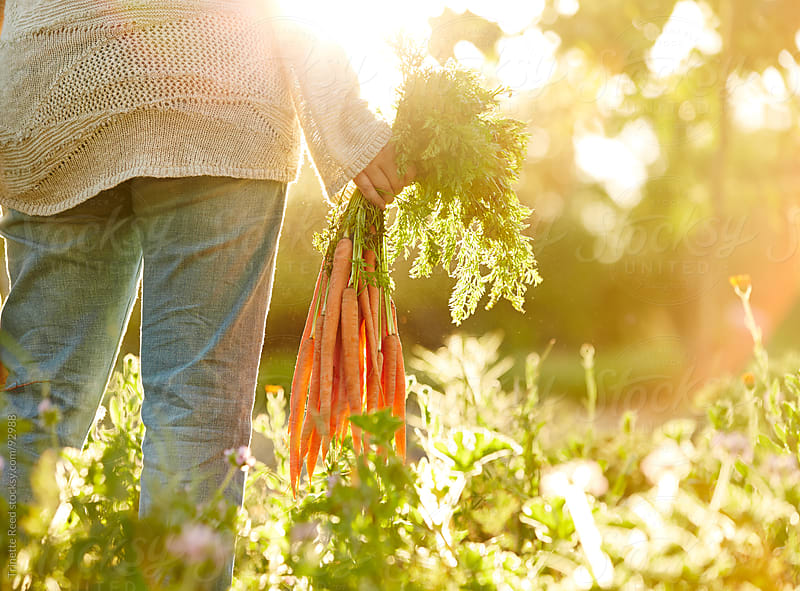 Woman farmer holding carrots at organic farm in California by Trinette Reed for Stocksy United