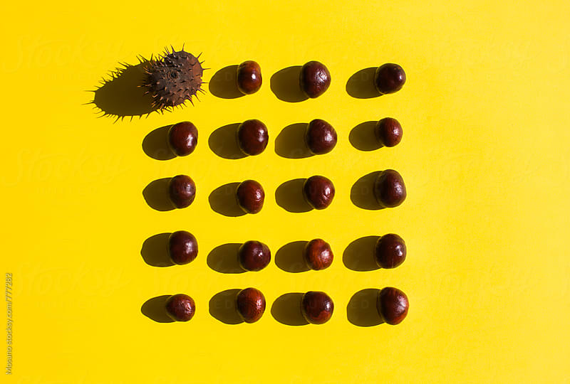 Rows of Chestnuts on a Yellow Background by Mosuno for Stocksy United
