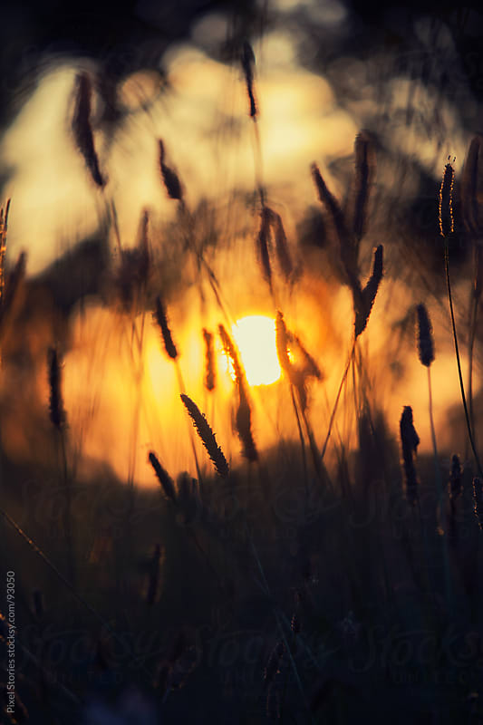 Dry grass during sunrise by Pixel Stories for Stocksy United