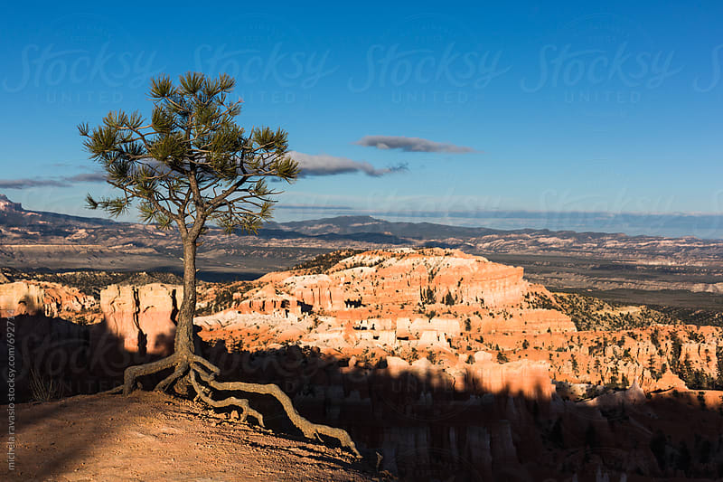 Lonely tree on Bryce Canyon by michela ravasio for Stocksy United