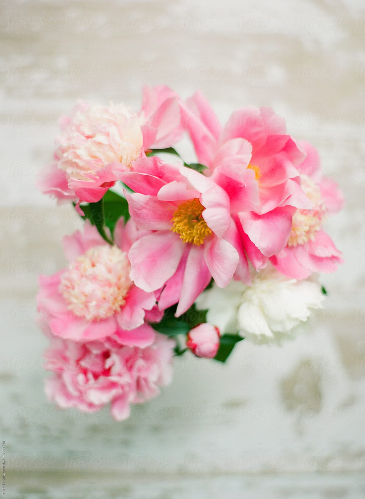 Portrait Of A Bouquet Of Peony Flowers From A Home Garden Stocksy