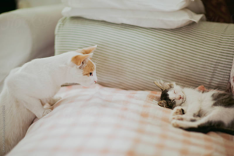I cannot believe you're still sleeping! by Laura Stolfi for Stocksy United