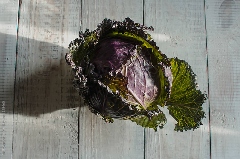 Cabbage by Neil Warburton for Stocksy United