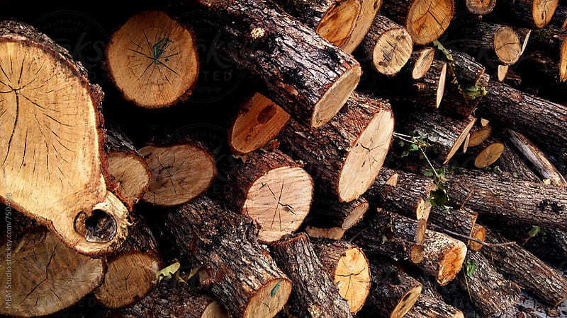 firewood by MEM Studio for Stocksy United