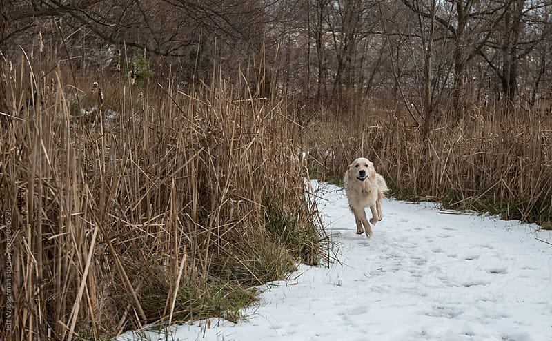 Dog Running in the Woods in Winter by Studio Six for Stocksy United