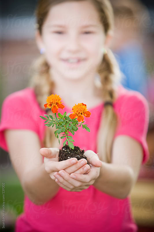 Planting: Focus on Marigold in Girl's Hands by Sean Locke for Stocksy United