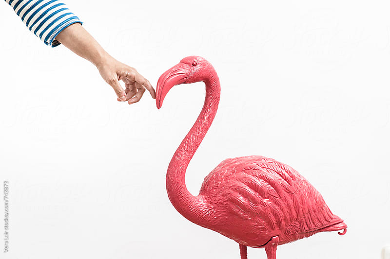 Plastic pink flamingo by Vera Lair for Stocksy United