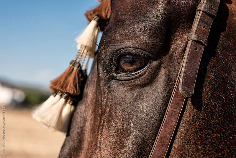Detail of an eye of a Spanish thoroughbred horse by Bisual Studio for Stocksy United