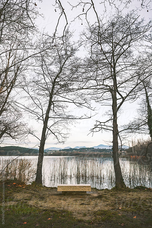 Trees on Banyoles Lakeshore, Spain by BONNINSTUDIO for Stocksy United