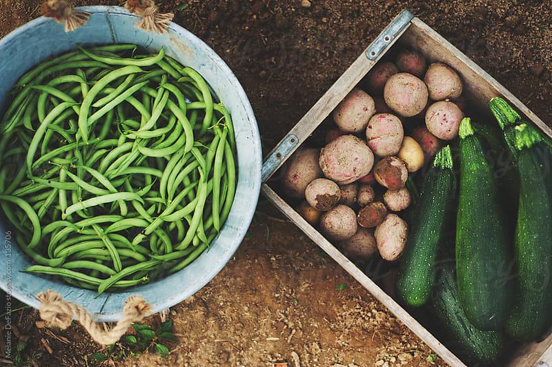Garden Harvest by Melanie DeFazio for Stocksy United