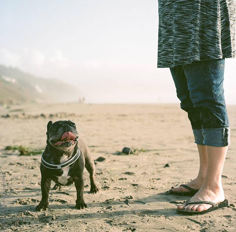 French Bulldog and the feet of her Owner on a Beach by Briana Morrison for Stocksy United