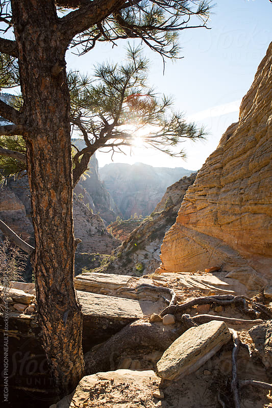 Vibrant Canyon with Glowing Afternoon Sun  by MEGHAN PINSONNEAULT for Stocksy United