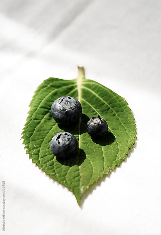 Blueberries on a leaf. by Rhonda Adkins for Stocksy United