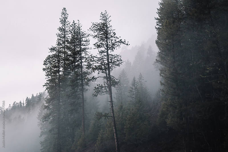 Fog and mist surrounding trees on a mountain by Justin Mullet for Stocksy United