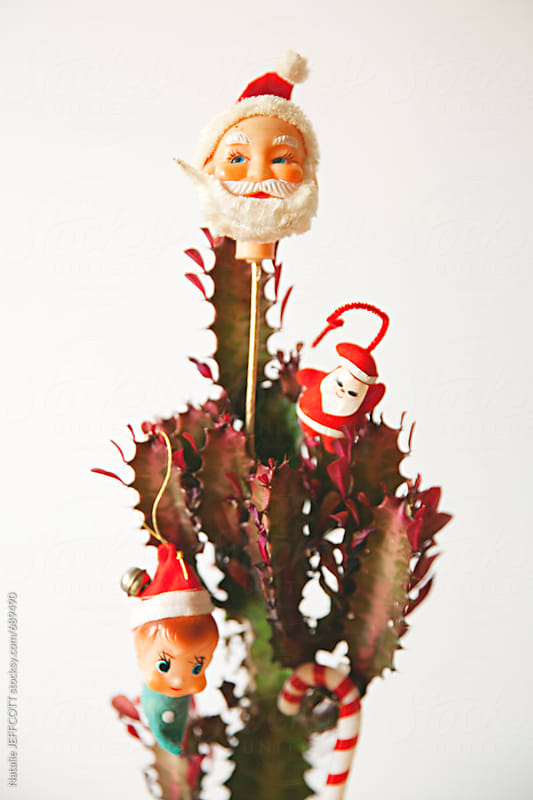 decorating a cactus succulent for christmas with vintage ornaments by natalie jeffcott for stocksy united - Decorating Cactus For Christmas