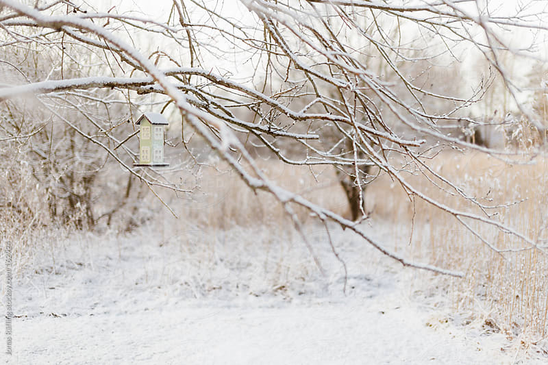 Aviary with snow covered branches in early morning by Jonas Räfling for Stocksy United