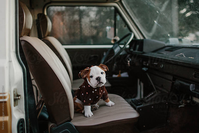 Puppy Sitting in Van by Sidney Morgan for Stocksy United