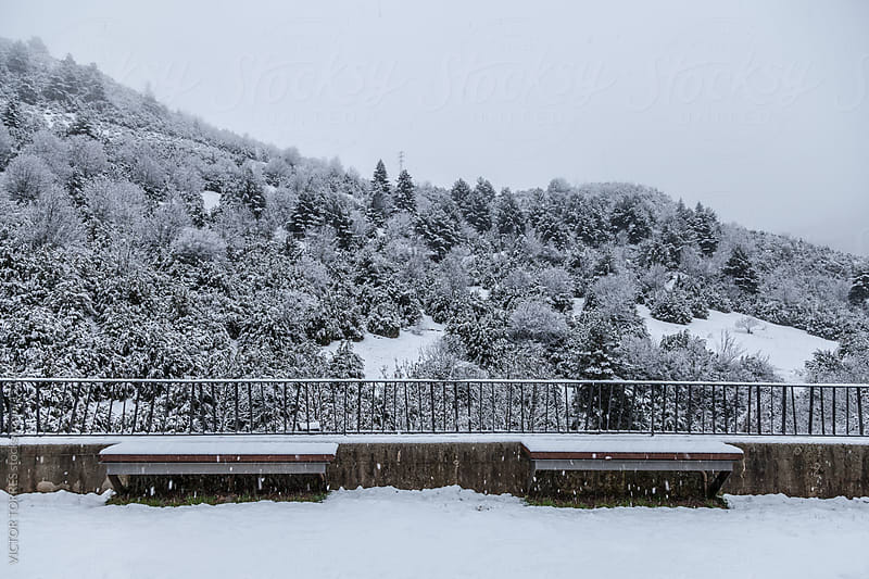 Two Benches in a Snowy Scene by VICTOR TORRES for Stocksy United