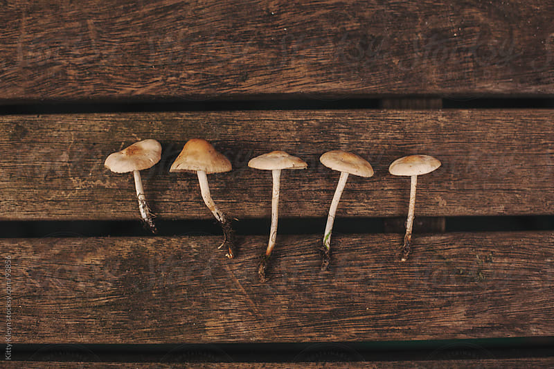 Picked mushrooms all in a line by Kitty Kleyn for Stocksy United