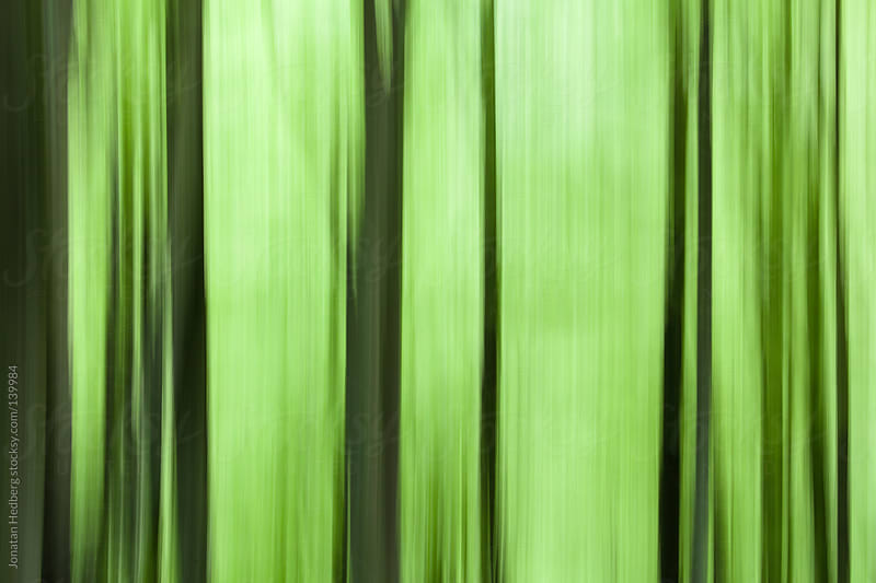 Blurred trees by Jonatan Hedberg for Stocksy United