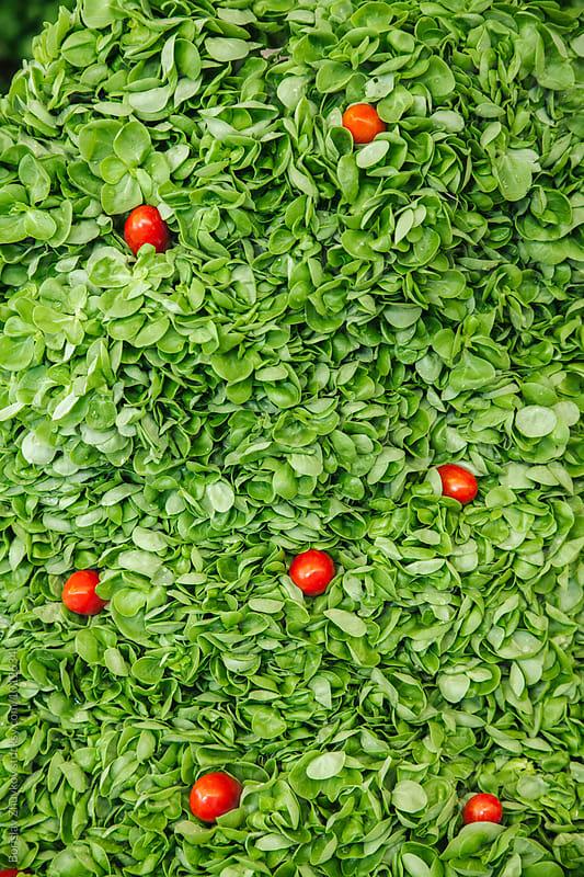 Fresh Green Salad - Purslane by Borislav Zhuykov for Stocksy United