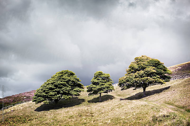 Trees under a dramatic sky by James Ross for Stocksy United