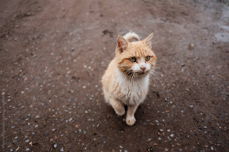 Cat Standing on The Street by Brkati Krokodil for Stocksy United