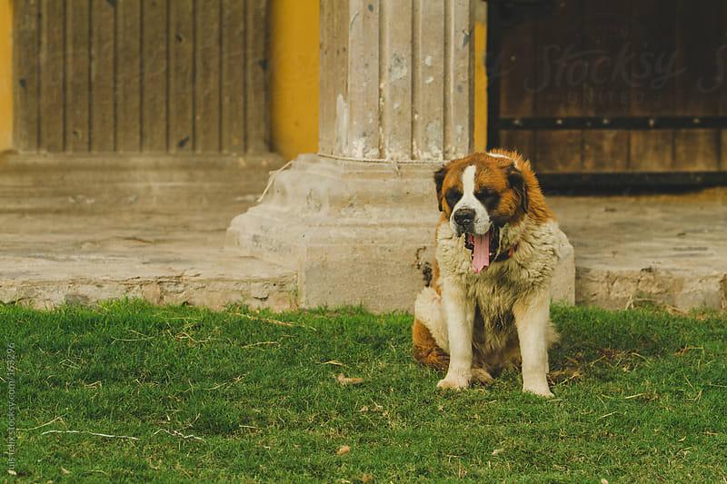 farm&animals by luis felix for Stocksy United