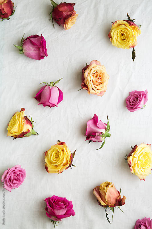 Pink and yellow roses by Ruth Black for Stocksy United