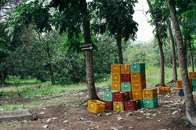 Multi-colored plastic crates full of newly harvested fruits left unattended by workers by Lawrence del Mundo for Stocksy United