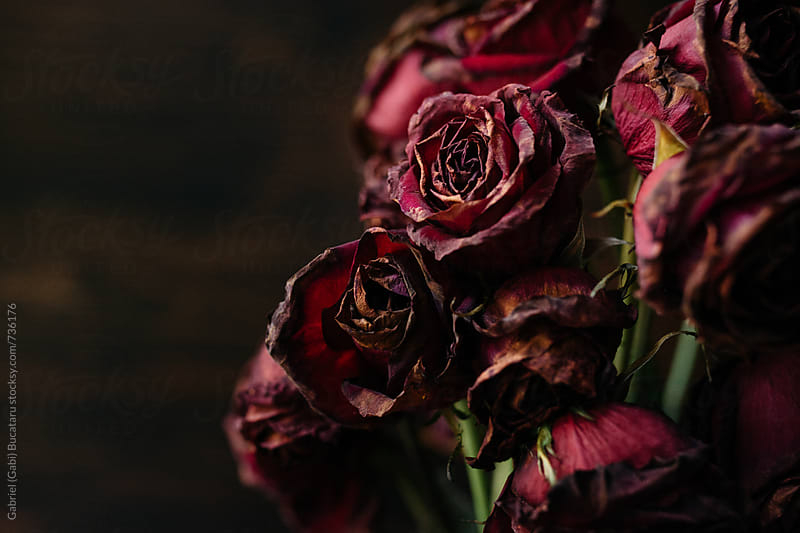 Bouquet of wilted crimson roses by Gabriel (Gabi) Bucataru for Stocksy United