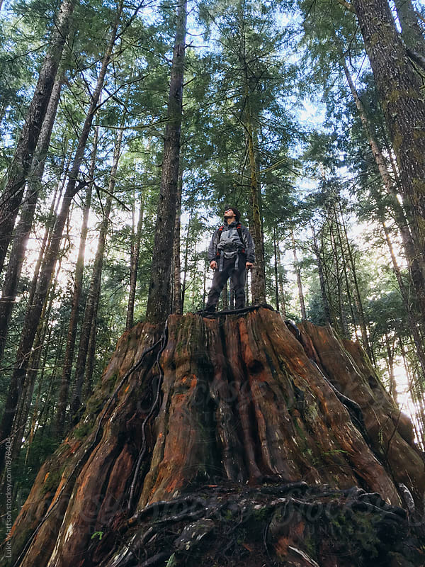 On Top Of An Old Cedar Stump by Luke Mattson for Stocksy United