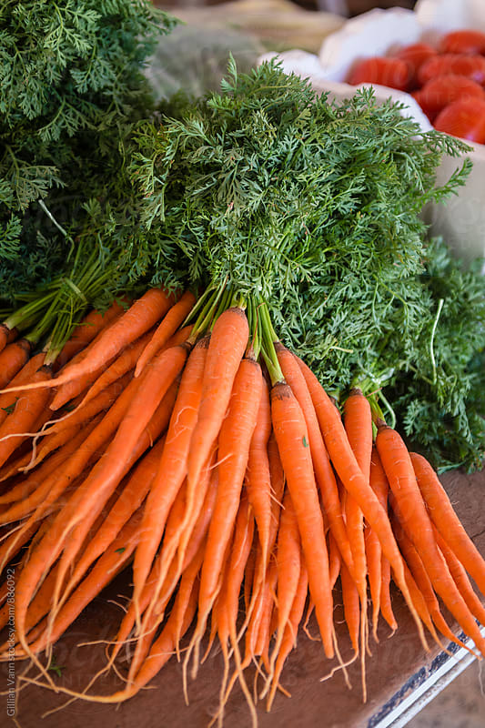 organic carrots with their green tops by Gillian Vann for Stocksy United