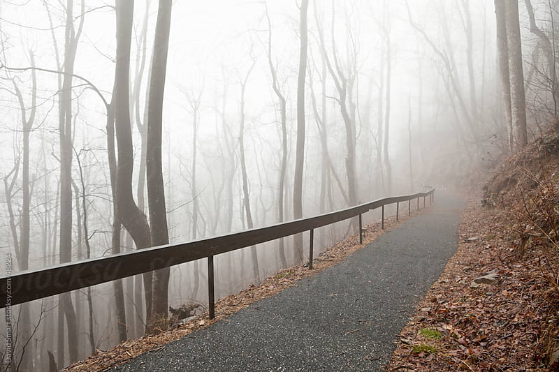 Fog shrouded lonely walking path through a forest of leafless trees on a steep mountainside. by David Smart for Stocksy United
