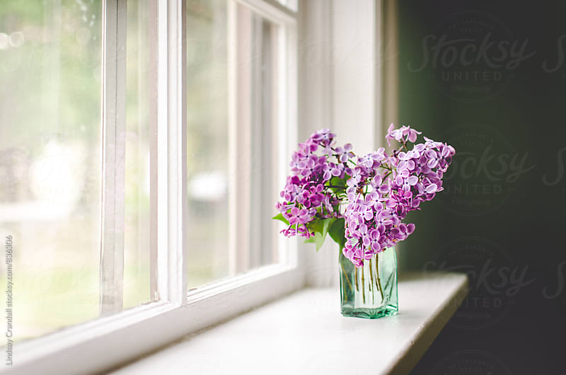 Lilacs in vase by window by Lindsay Crandall for Stocksy United