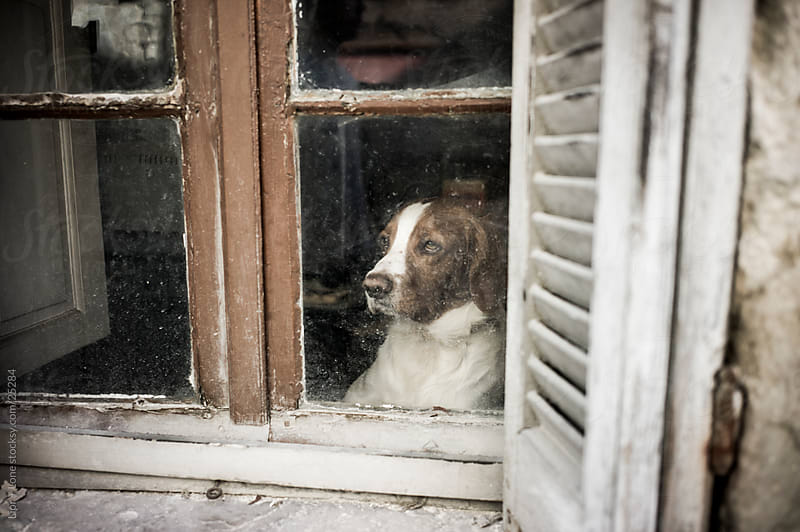 Shepherd dog staring out of a dirty window by Lior + Lone for Stocksy United