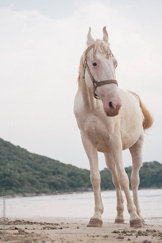 single horse on the seashore by RG&B Images for Stocksy United